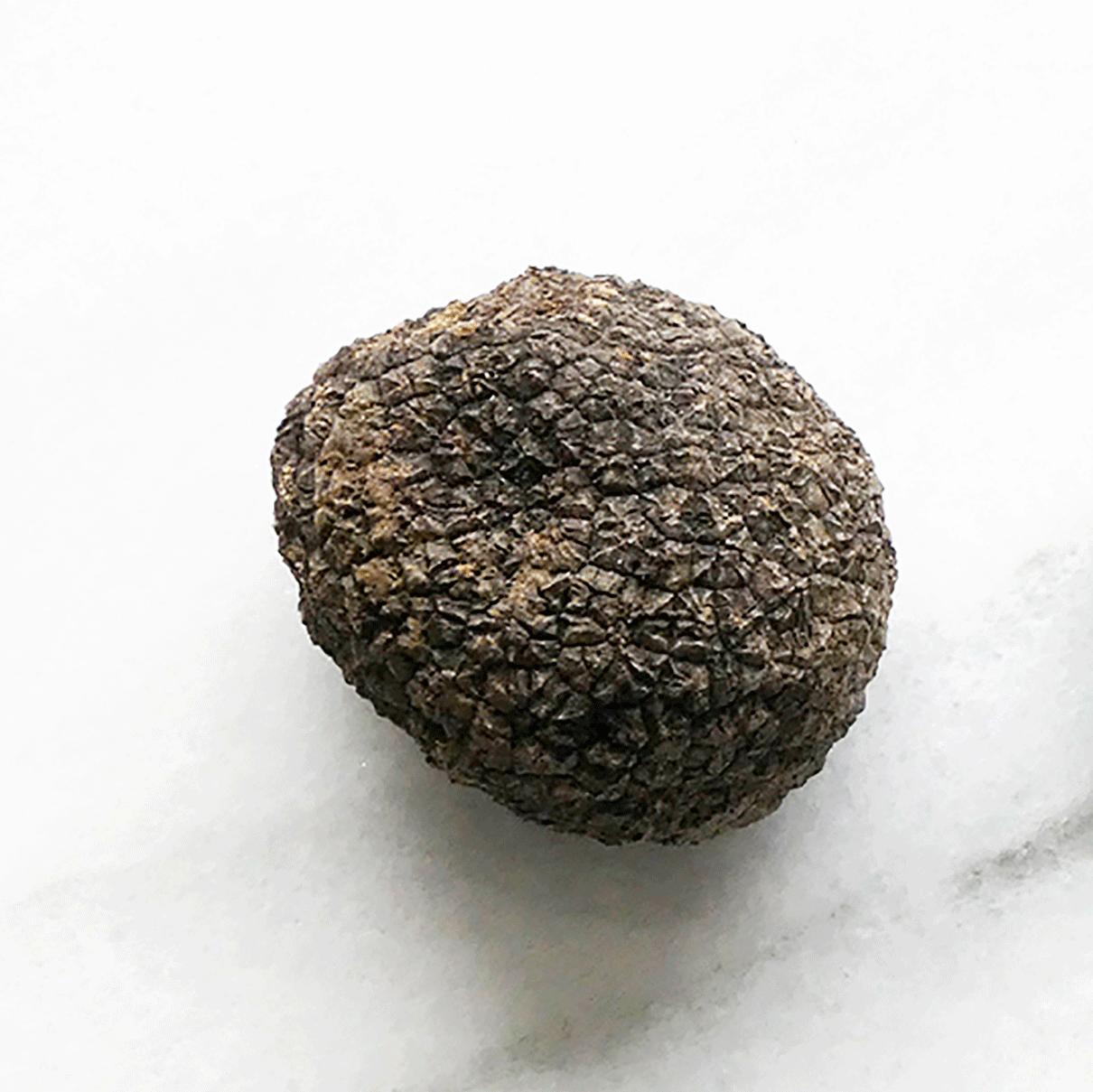 Tuber aestivum vitt  Black summer truffleruffle